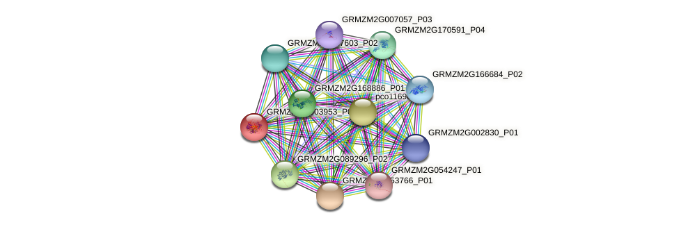 GRMZM2G003953_P02 protein (Zea mays) - STRING interaction network