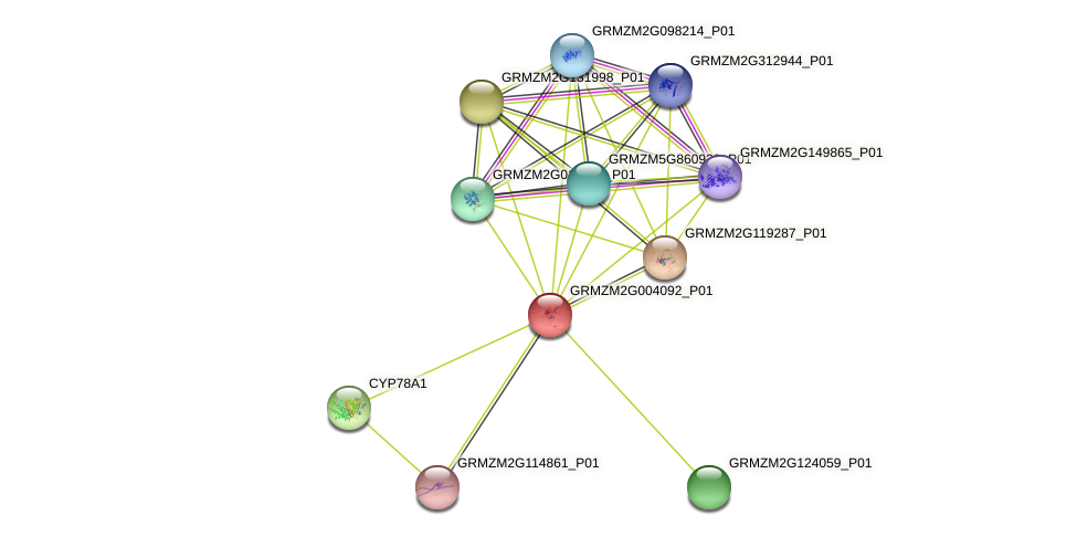 GRMZM2G004092_P01 protein (Zea mays) - STRING interaction network