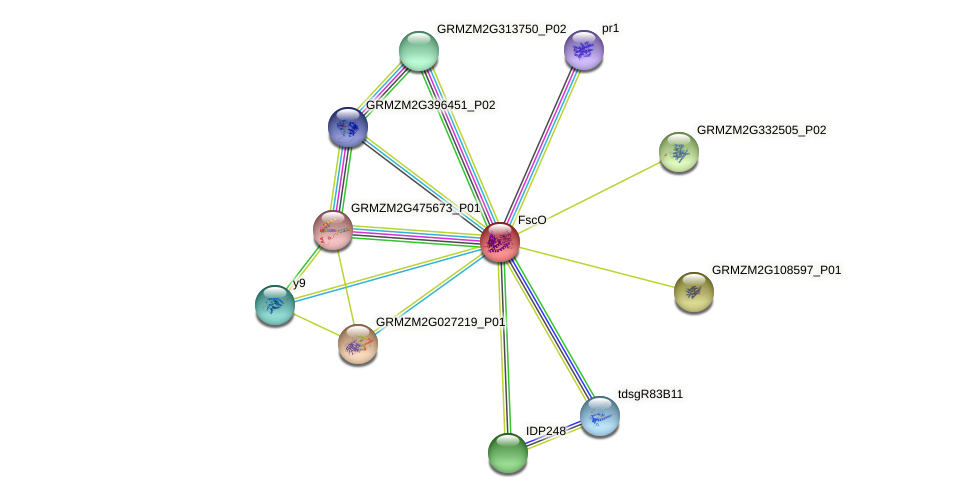 Zm.43615 protein (Zea mays) - STRING interaction network