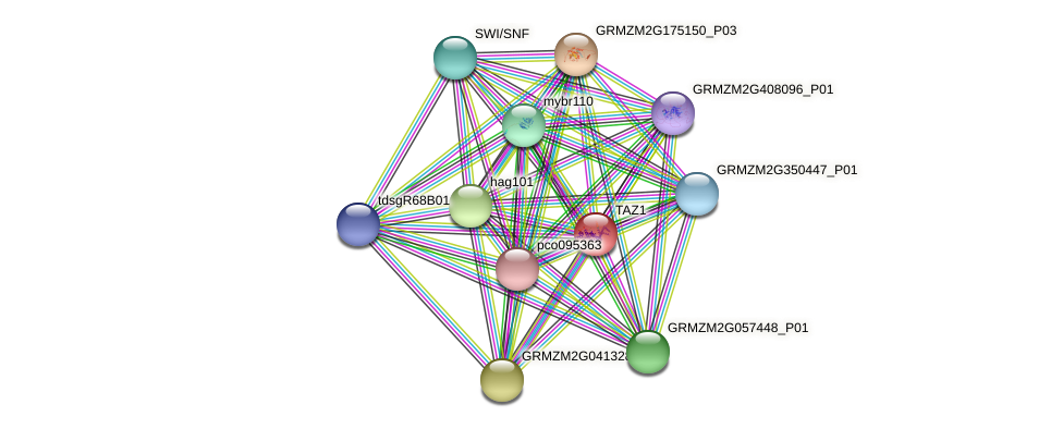 TAZ1 protein (Zea mays) - STRING interaction network