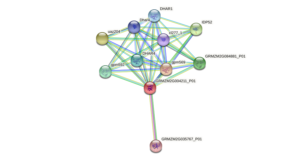 Zm.28302 protein (Zea mays) - STRING interaction network