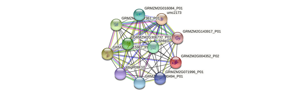 GRMZM2G004352_P02 protein (Zea mays) - STRING interaction network