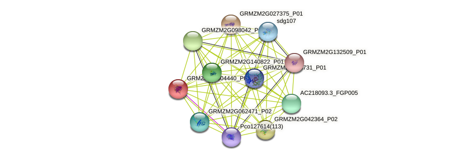 GRMZM2G004440_P01 protein (Zea mays) - STRING interaction network