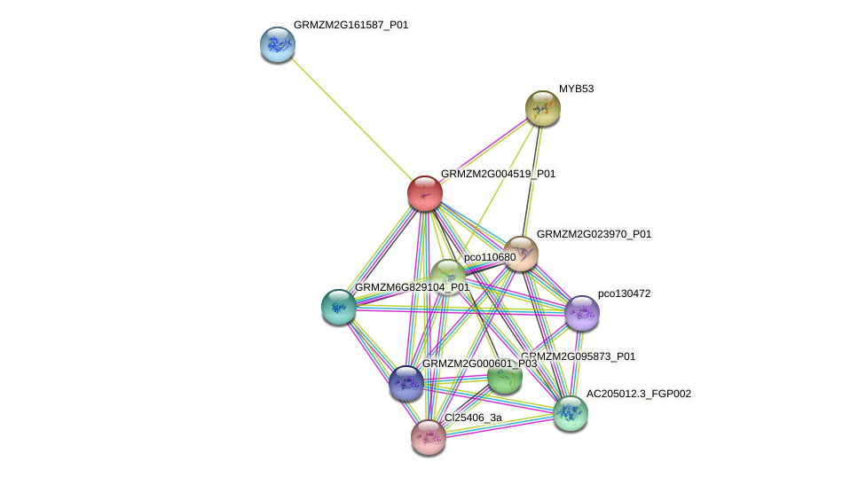 GRMZM2G004519_P01 protein (Zea mays) - STRING interaction network
