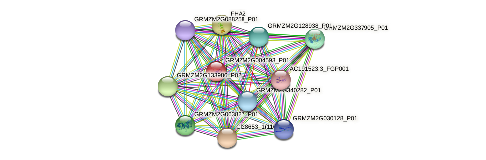 GRMZM2G004593_P01 protein (Zea mays) - STRING interaction network