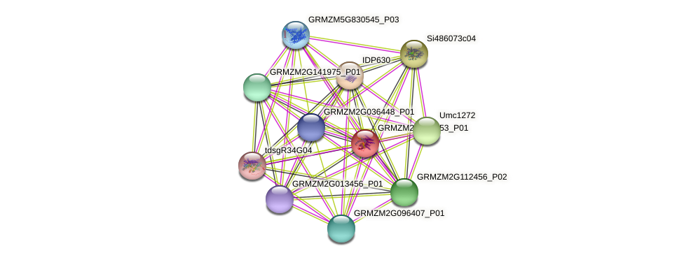 GRMZM2G004653_P01 protein (Zea mays) - STRING interaction network