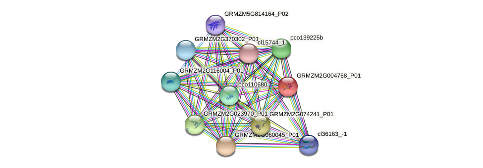 GRMZM2G004768_P01 protein (Zea mays) - STRING interaction network