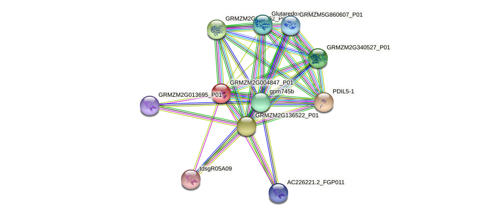 GRMZM2G004847_P01 protein (Zea mays) - STRING interaction network