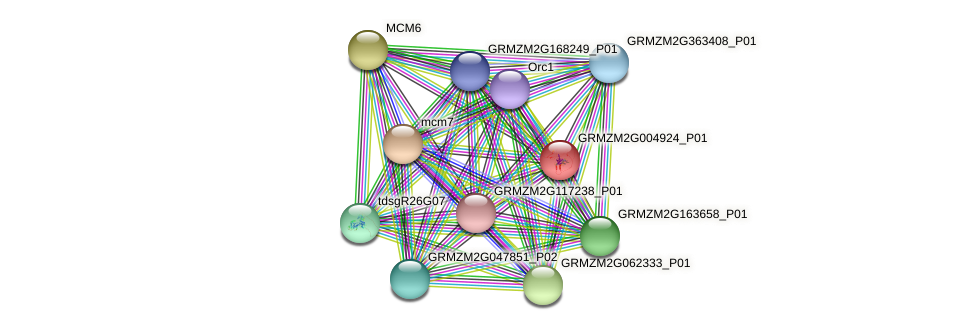 GRMZM2G004924_P01 protein (Zea mays) - STRING interaction network
