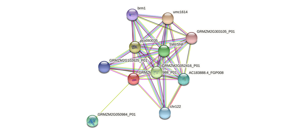 Zm.85562 protein (Zea mays) - STRING interaction network