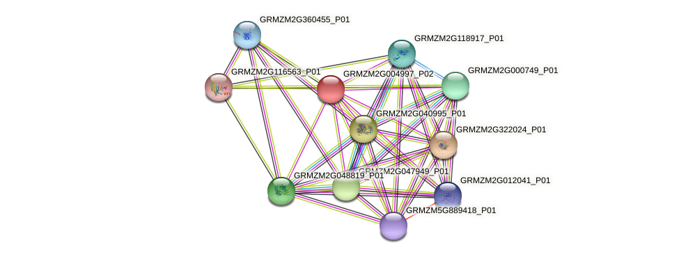 GRMZM2G004997_P02 protein (Zea mays) - STRING interaction network