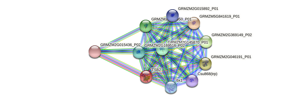 TSB2 protein (Zea mays) - STRING interaction network