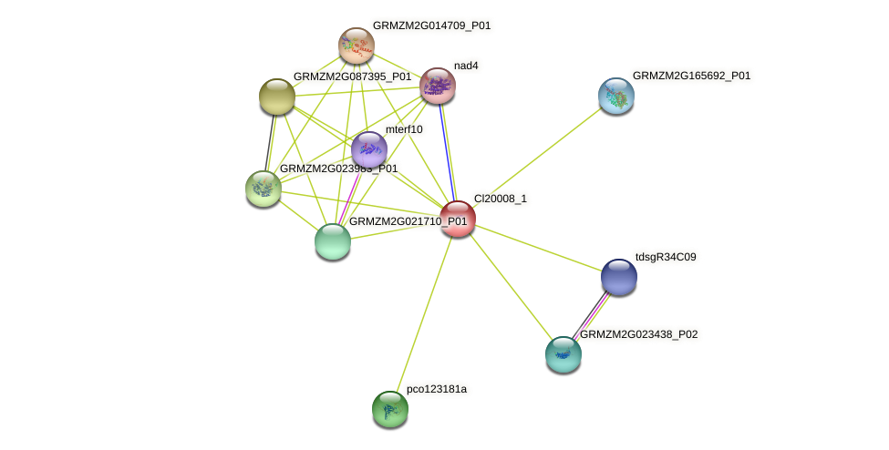 Zm.83376 protein (Zea mays) - STRING interaction network