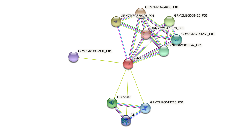 mybr46 protein (Zea mays) - STRING interaction network