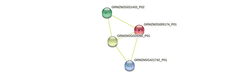 GRMZM2G005174_P01 protein (Zea mays) - STRING interaction network