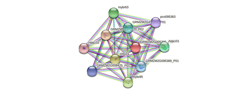 GRMZM2G005205_P02 protein (Zea mays) - STRING interaction network