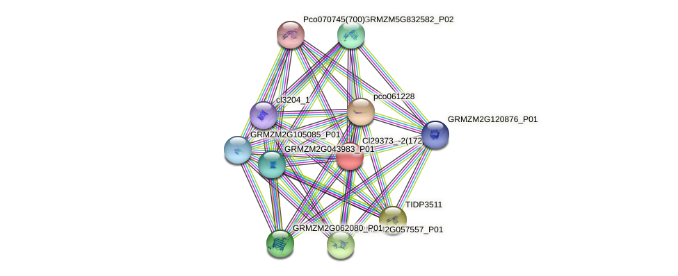 GRMZM2G005209_P01 protein (Zea mays) - STRING interaction network