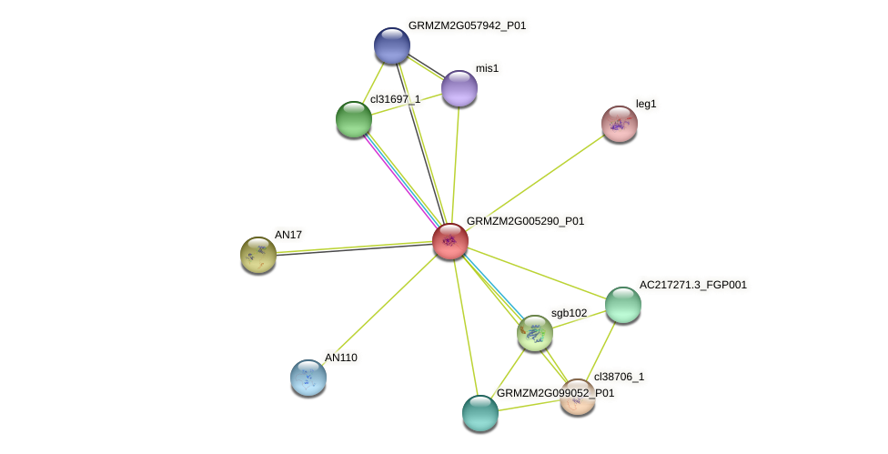 GRMZM2G005290_P01 protein (Zea mays) - STRING interaction network