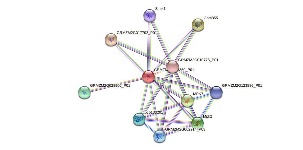 GRMZM2G005350_P01 protein (Zea mays) - STRING interaction network