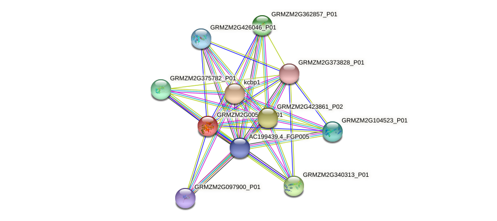 GRMZM2G005557_P01 protein (Zea mays) - STRING interaction network