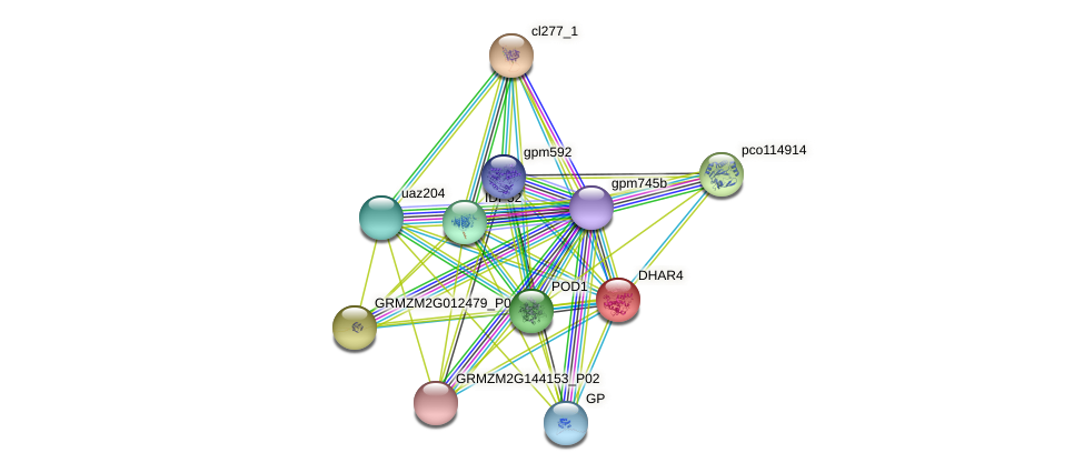 DHAR4 protein (Zea mays) - STRING interaction network