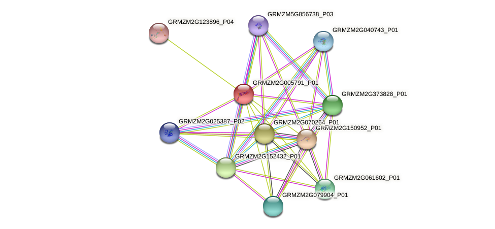 GRMZM2G005791_P01 protein (Zea mays) - STRING interaction network