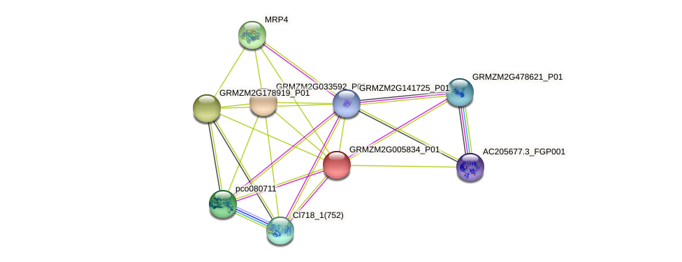 GRMZM2G005834_P01 protein (Zea mays) - STRING interaction network