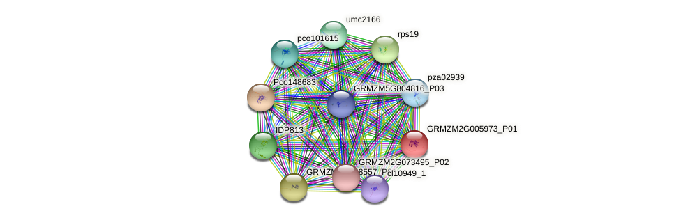 100283907 protein (Zea mays) - STRING interaction network
