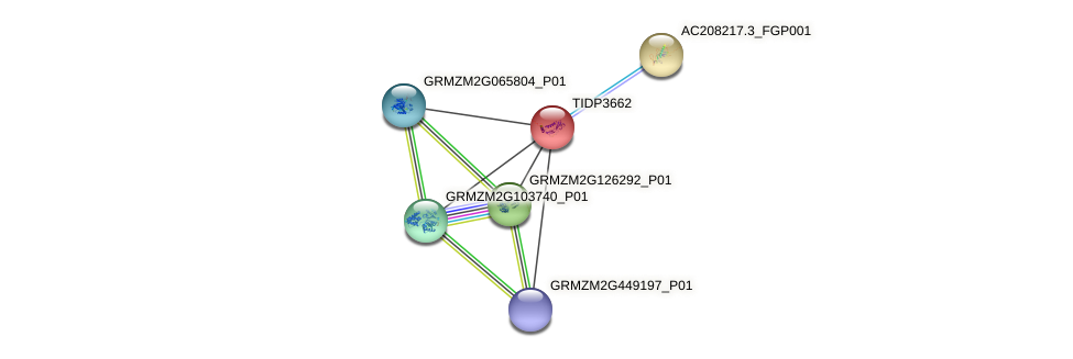 TIDP3662 protein (Zea mays) - STRING interaction network