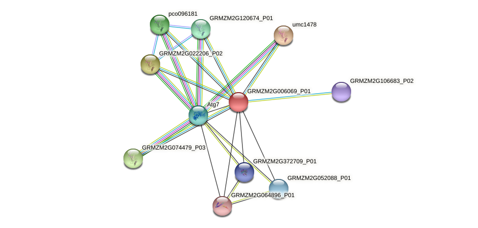 GRMZM2G006069_P01 protein (Zea mays) - STRING interaction network