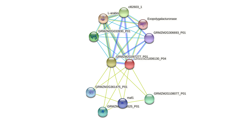 Zm.5548 protein (Zea mays) - STRING interaction network