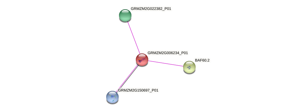 GRMZM2G006234_P01 protein (Zea mays) - STRING interaction network