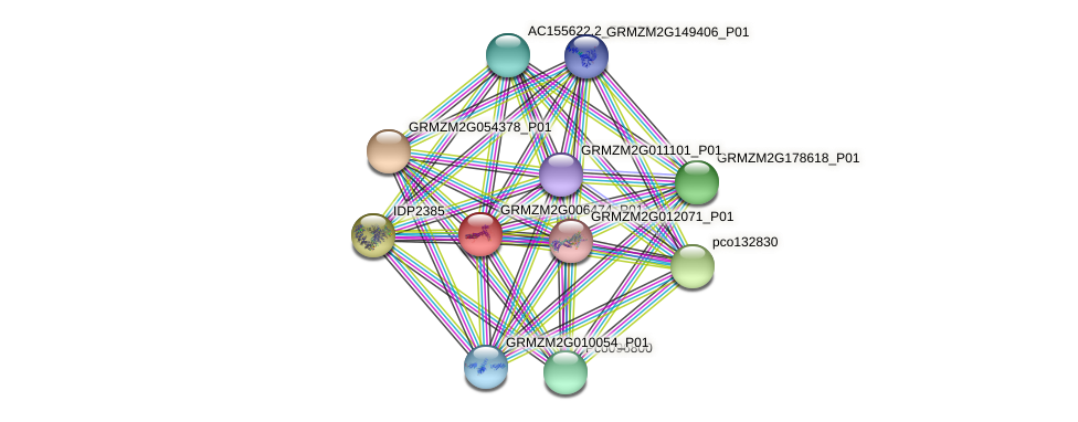 Zm.25250 protein (Zea mays) - STRING interaction network