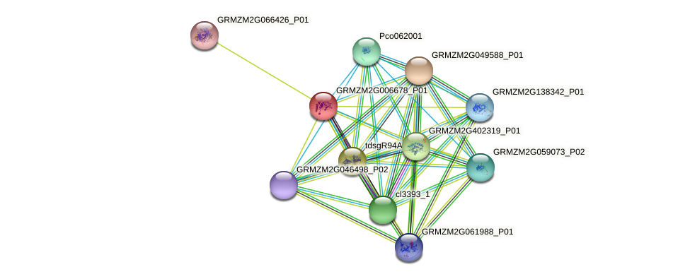 GRMZM2G006678_P01 protein (Zea mays) - STRING interaction network