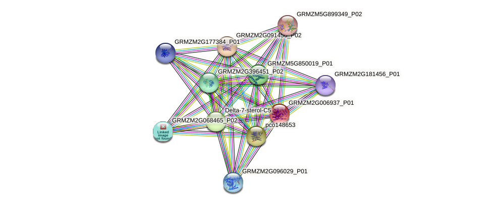 GRMZM2G006937_P01 protein (Zea mays) - STRING interaction network
