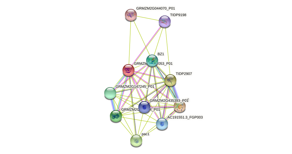 GRMZM2G007053_P01 protein (Zea mays) - STRING interaction network