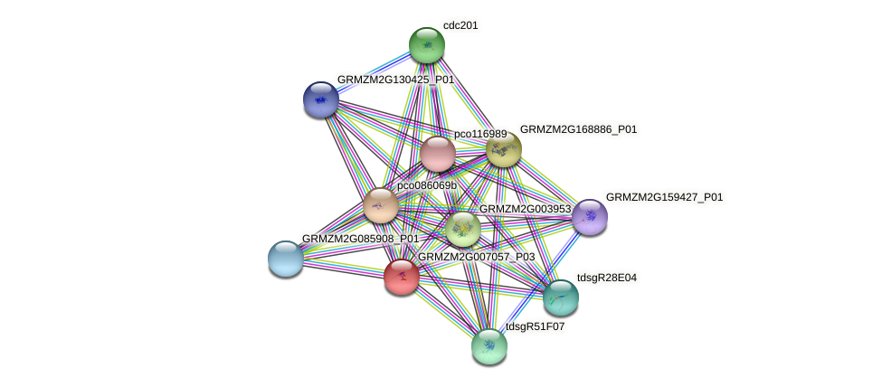 GRMZM2G007057_P03 protein (Zea mays) - STRING interaction network