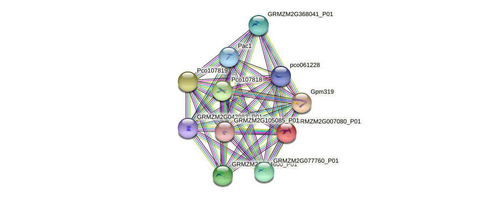 GRMZM2G007080_P01 protein (Zea mays) - STRING interaction network