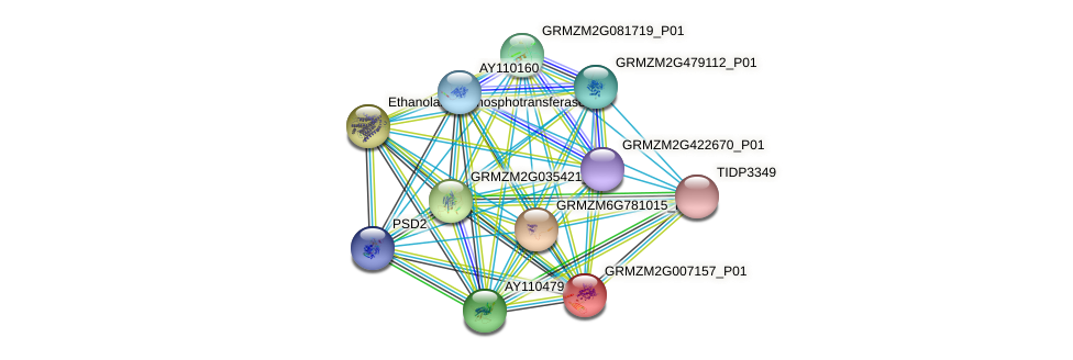GRMZM2G007157_P01 protein (Zea mays) - STRING interaction network