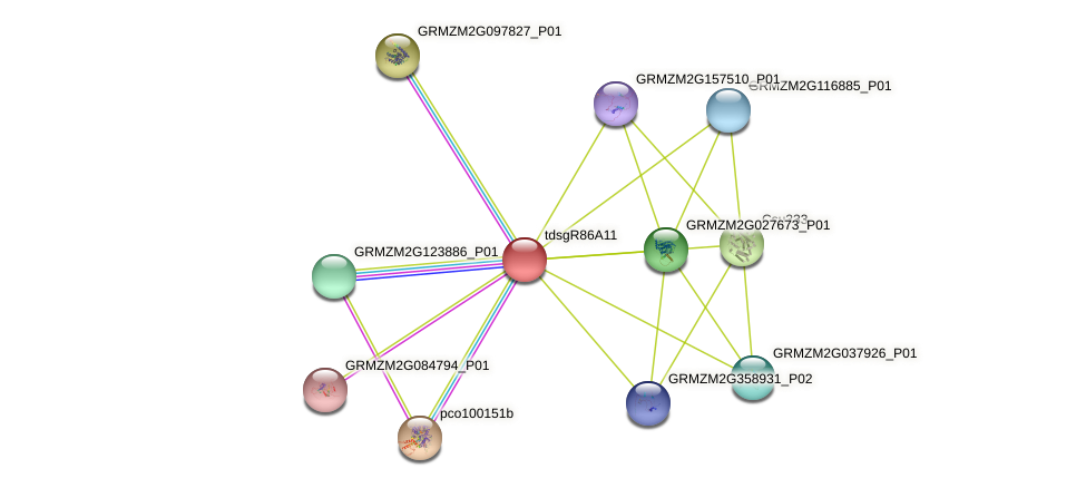 GRMZM2G007283_P01 protein (Zea mays) - STRING interaction network
