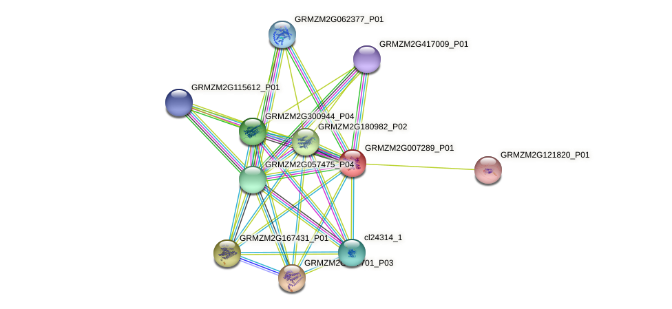 GRMZM2G007289_P01 protein (Zea mays) - STRING interaction network