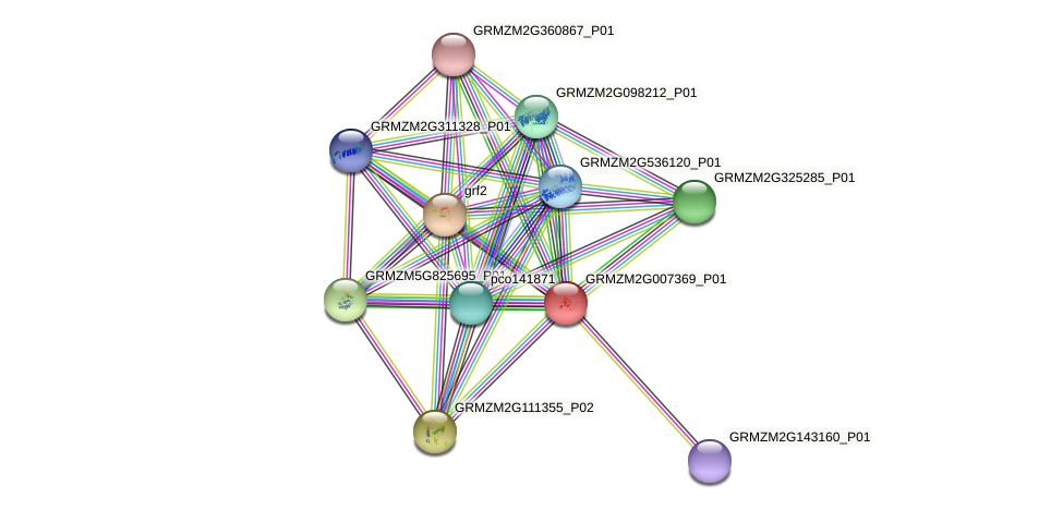 GRMZM2G007369_P01 protein (Zea mays) - STRING interaction network