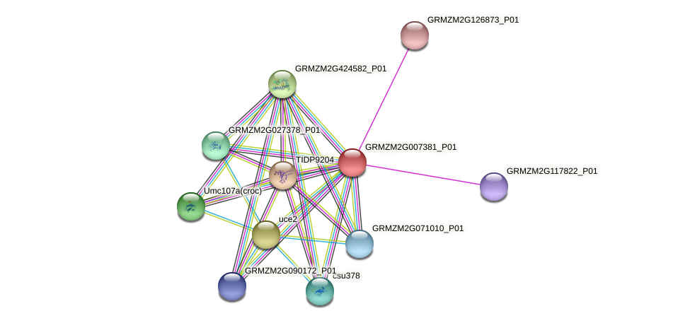 GRMZM2G007381_P01 protein (Zea mays) - STRING interaction network