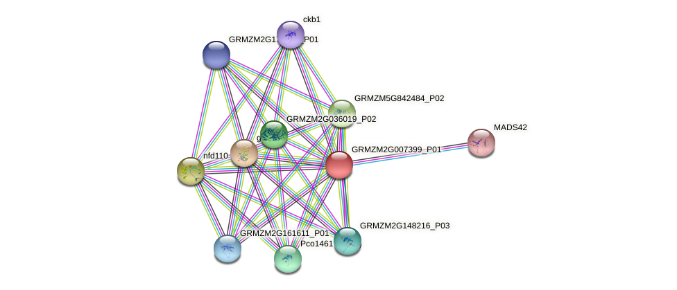 GRMZM2G007399_P01 protein (Zea mays) - STRING interaction network