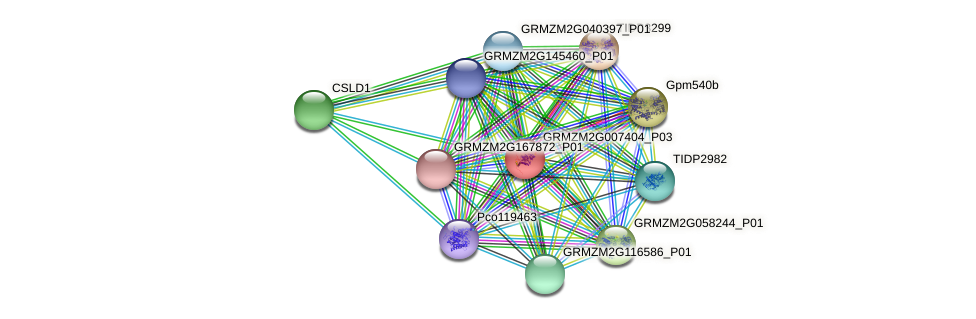 GRMZM2G007404_P03 protein (Zea mays) - STRING interaction network