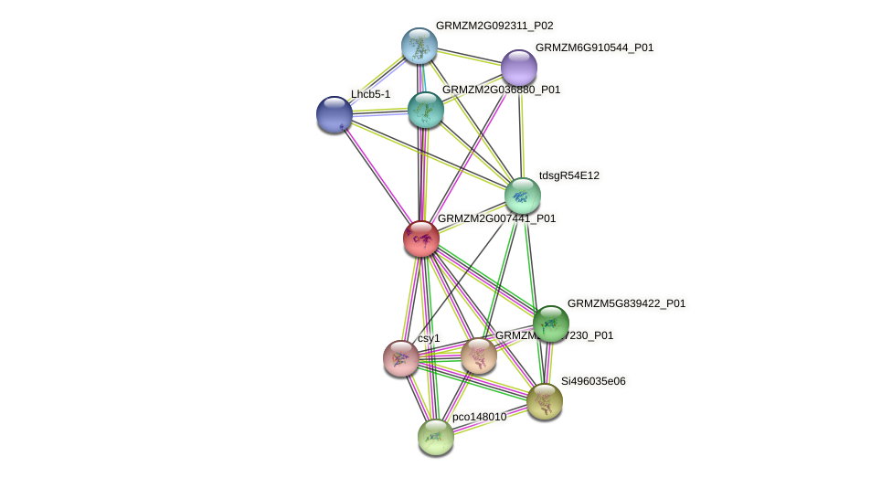 Zm.30543 protein (Zea mays) - STRING interaction network