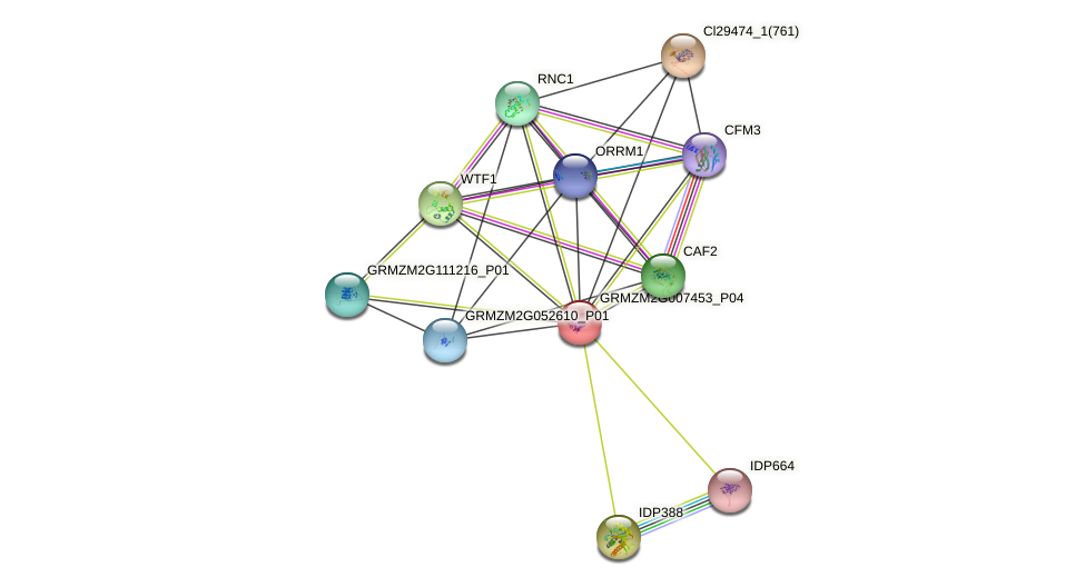 GRMZM2G007453_P01 protein (Zea mays) - STRING interaction network