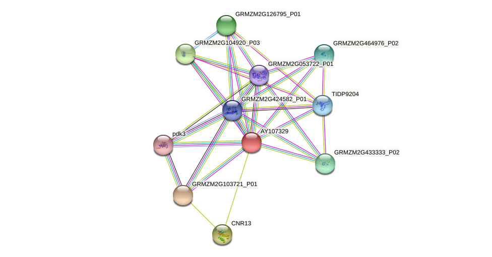 AY107329 protein (Zea mays) - STRING interaction network
