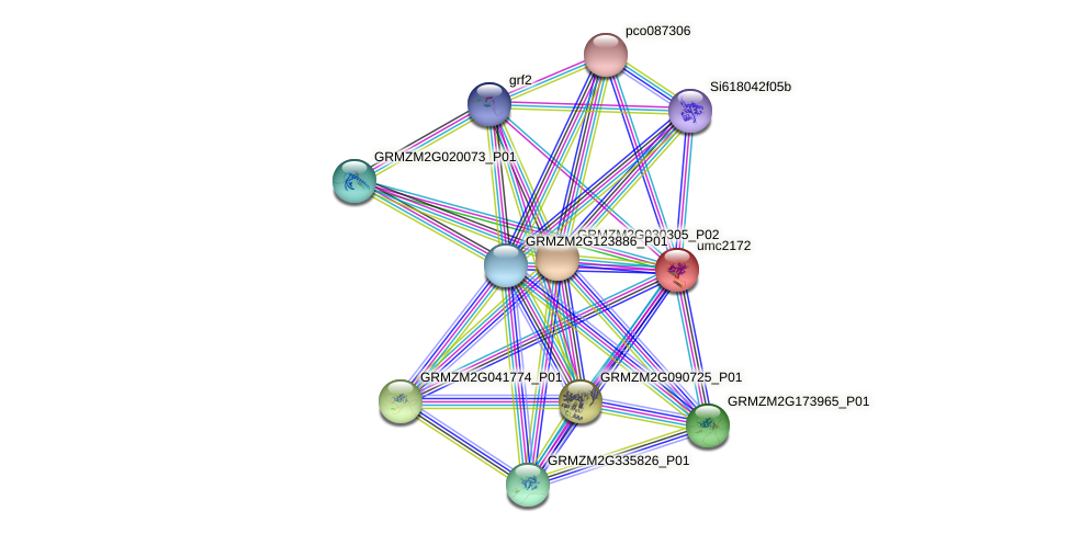 GRMZM2G007477_P02 protein (Zea mays) - STRING interaction network