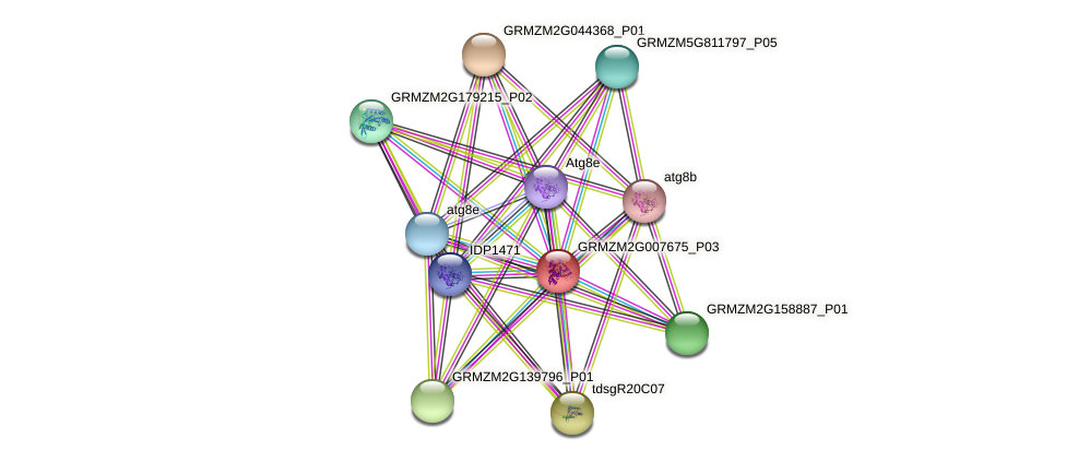 GRMZM2G007675_P03 protein (Zea mays) - STRING interaction network